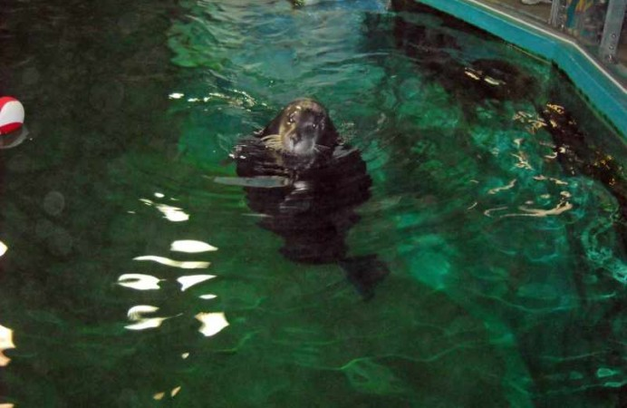 16-norvegia-tromso-polaria-foche
