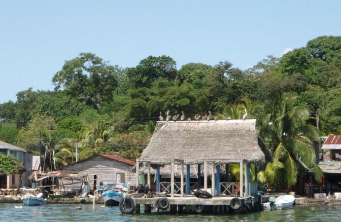 Guatemala - 1804 - Livingston - Pelicans on Building