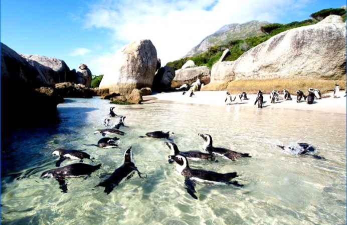 3-pinguini-cape-town-sudafrica