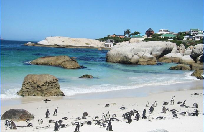 3-sudafrica-citta-del-capo-pinguini