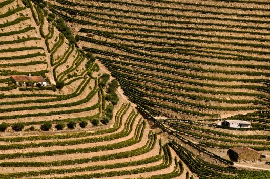 4_Near-Pinhao-Portugal-_DSC1574-12-09-08