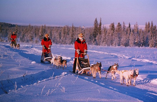 Dog sleigh (28)