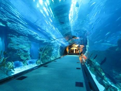 dubai-mall-sea-aquarium