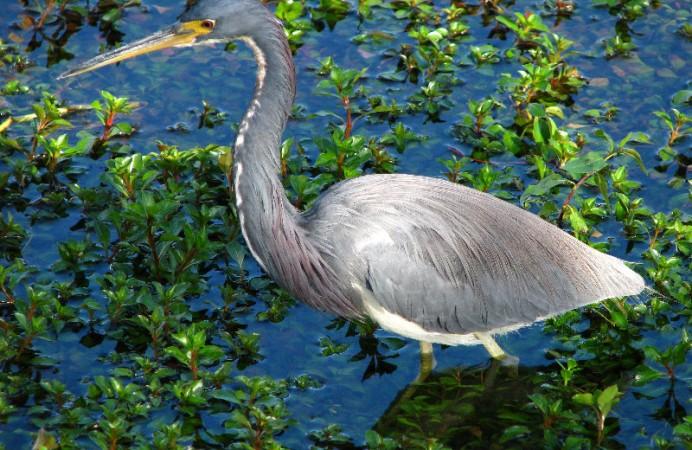 Everglades-National-Park-Homestead-FL-064