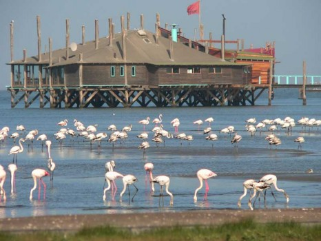 Flamingo-Walvis-Bay