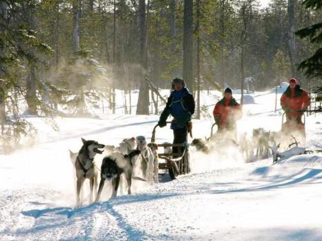Husky_safari_in_Lapland