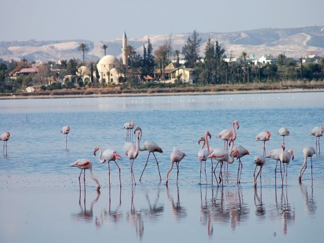 Larnaca-Salt-Lake