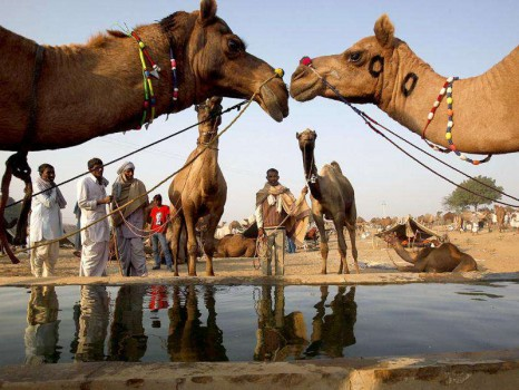 Pushkar-Camel-Fair-HT