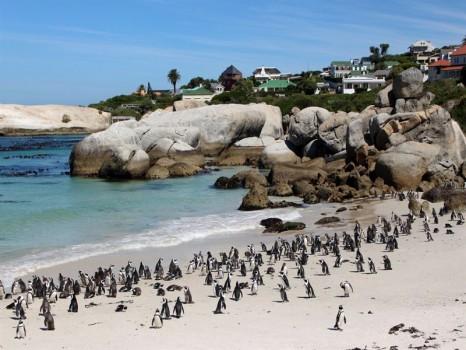 sudafrica-boulders-beach