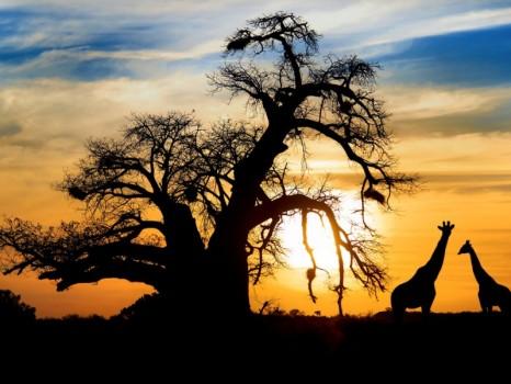 tour_in_sudafrica_deatravel-tsa-800x600