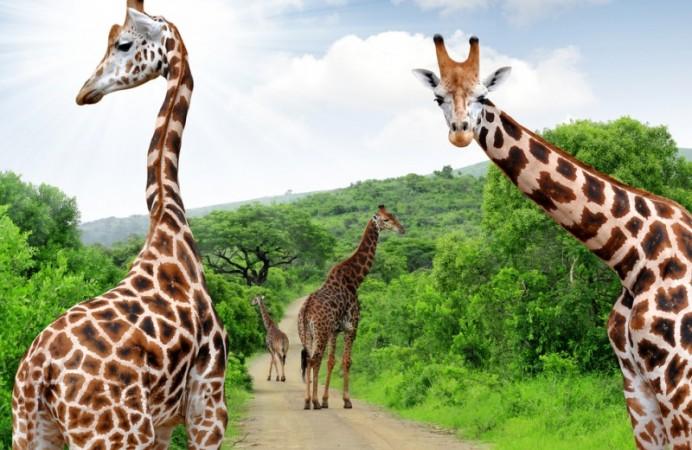 tour_in_sudafrica_safari-tsa-800x600