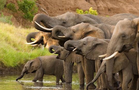 big-five-safari-sabi-sands-elephant-large-1-538x350
