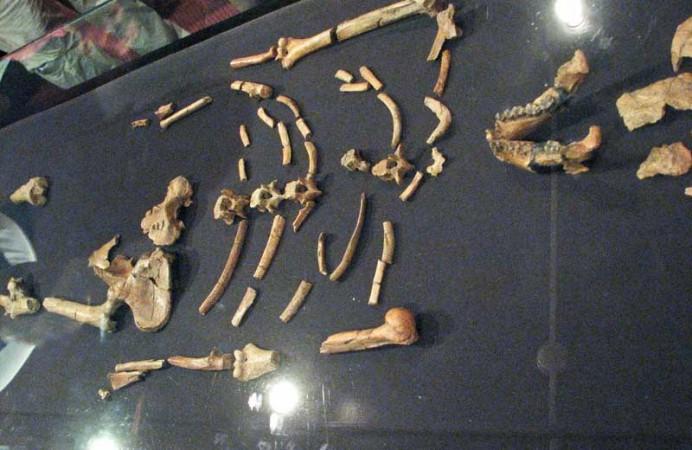 etiopia_levi_addis_abeba_national_museum1