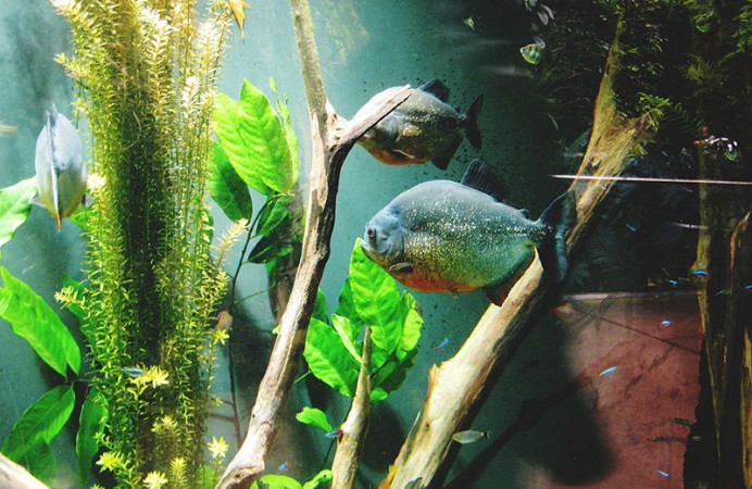 fish-at-montreal-biodome