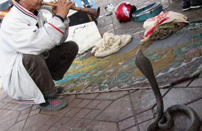 l_morocco-marrakech-djemaa-el-fna-snake-charmer-1