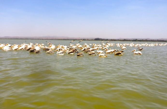 lago Chamo