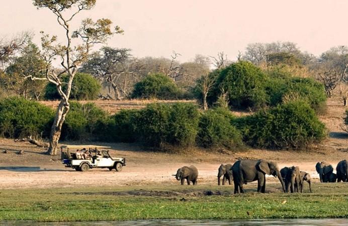 moremi riserva naturale botswana