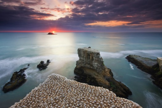 muriwai_sunset_auckland