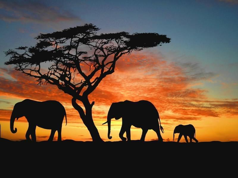 tour in namibia