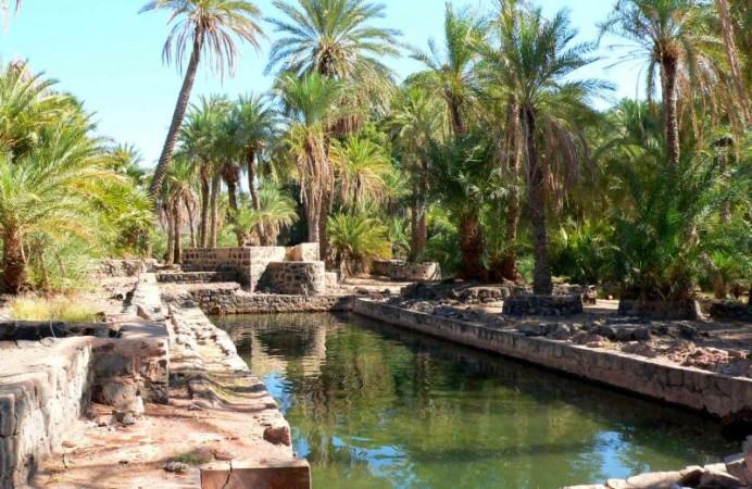 palmeraiededikhil