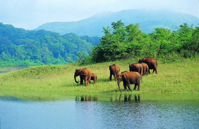 periyar-wild-life-santuary