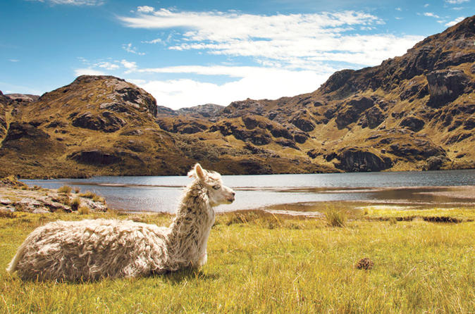 private-day-tour-to-cajas-national-park-from-cuenca-in-cuenca-382439