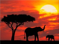 s_africa_principale