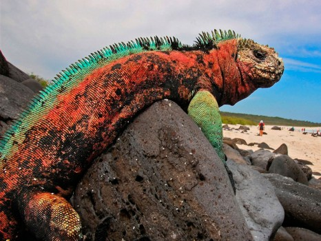 the-galapagos-islands-espanola-garden-bay