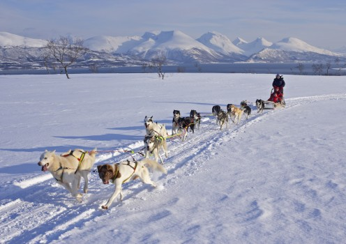 ~no: Hundekjøring ~en: Dog sledding
