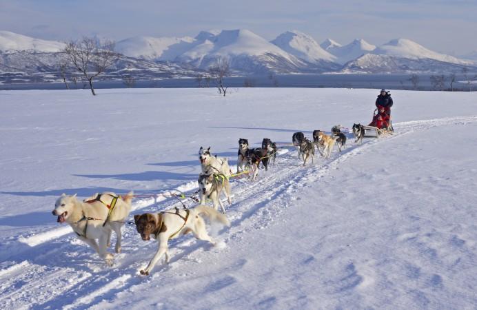 ~no: Hundekjøring ~en: Dog sledding